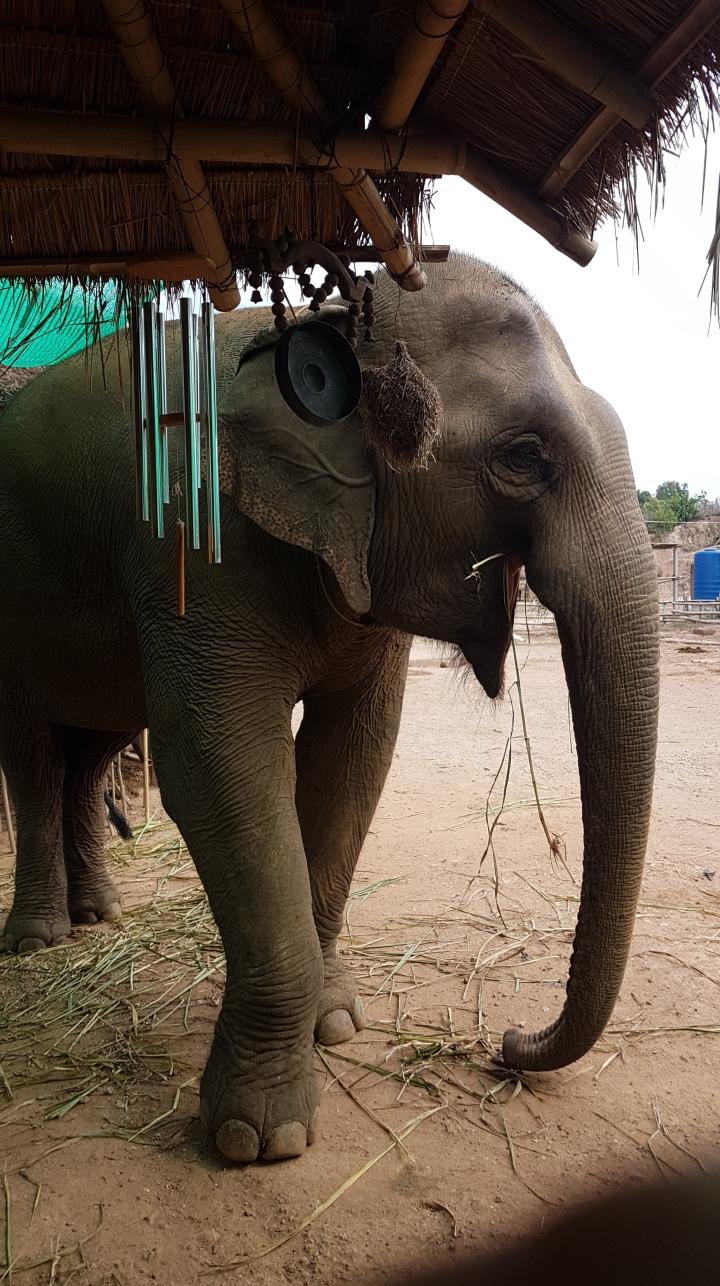 Chiang Rai – Une journée dans la jungle avec leséléphants