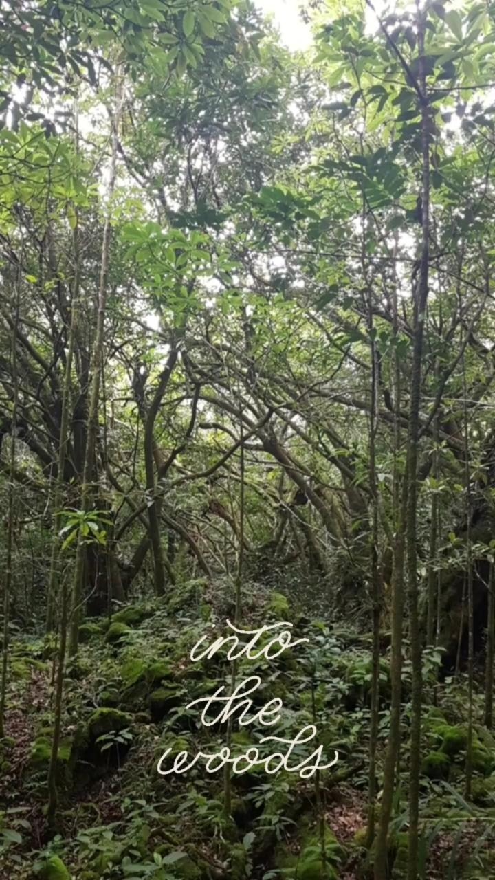Le sentier botanique de la forêt de Mare Longue – SaintPhilippe