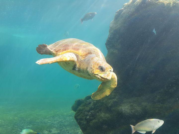Kélonia : visite du centre de recherche et de soins des tortues marines – SaintLeu