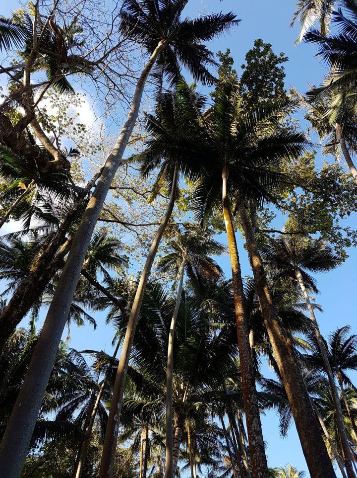 Bivouac à La Réunion : Anse desCascades
